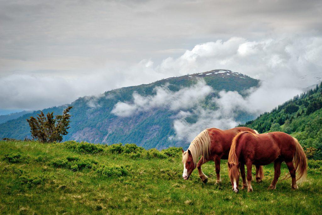 Gaustatopeno kalnas