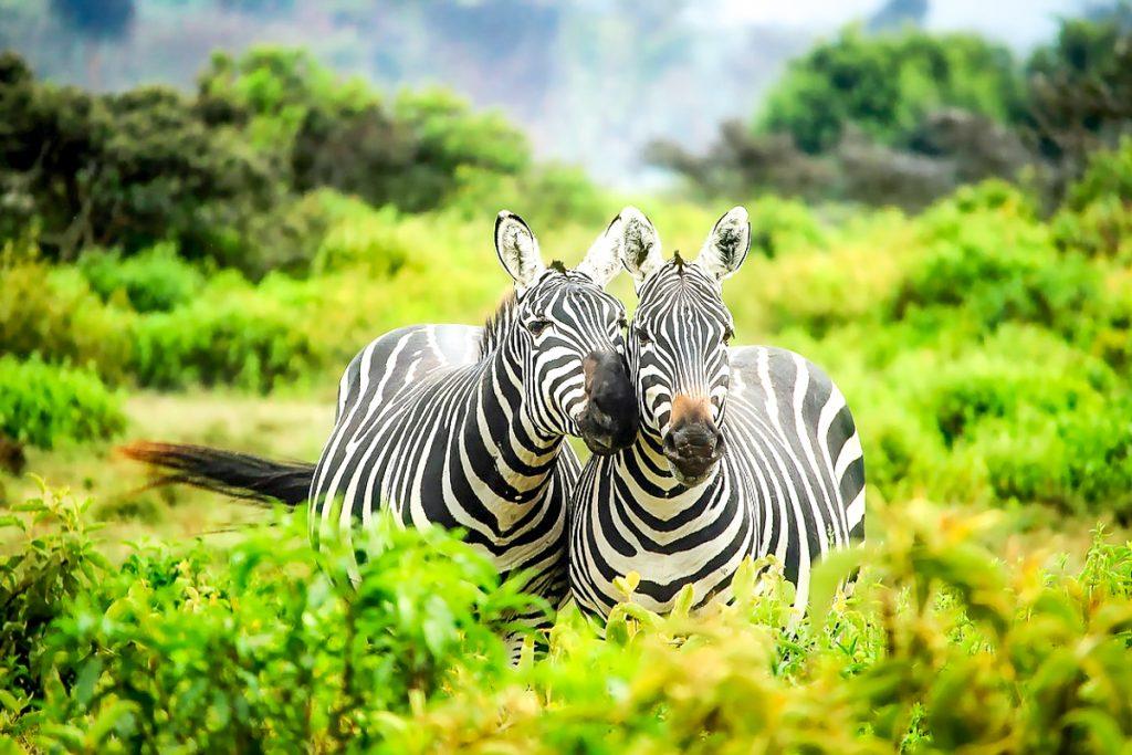 Ką pamatyti Kenijoje