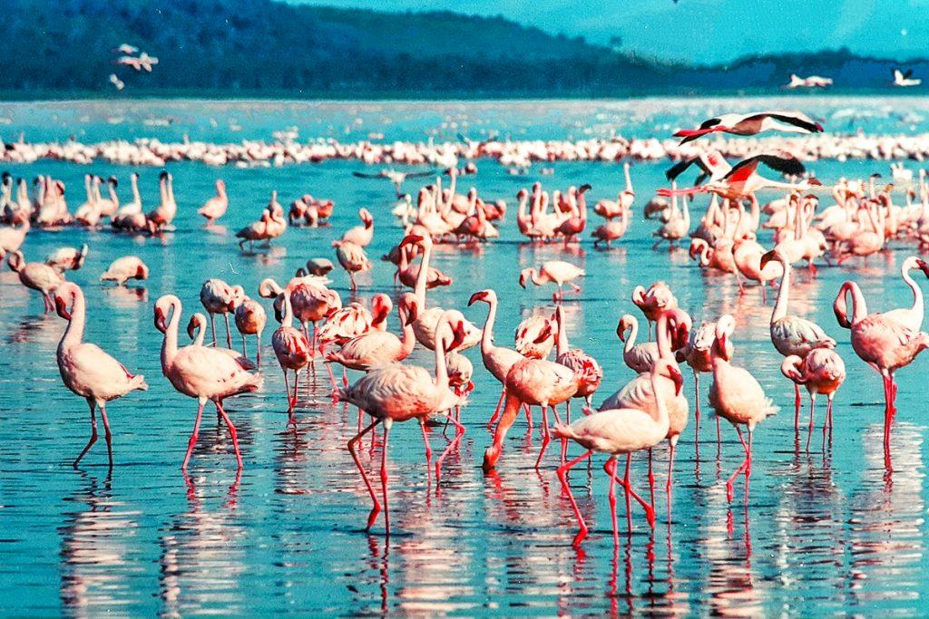 Nakuru nacionalinis parkas