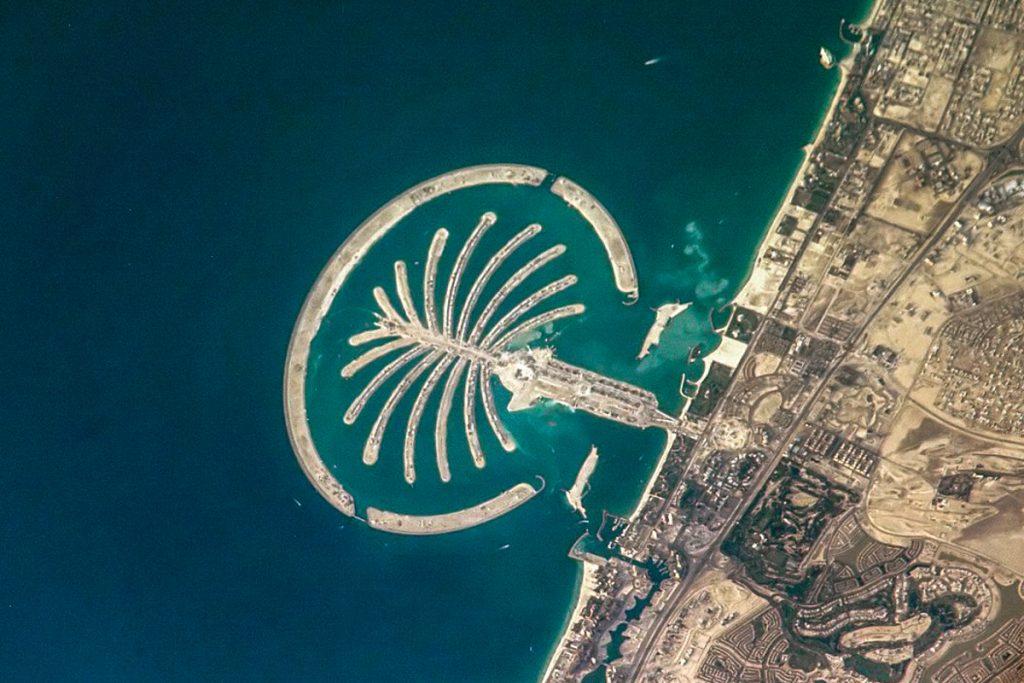 Palmių salynas