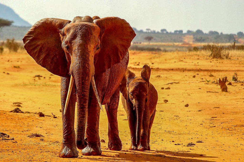 Tsavo East nacionalinis parkas