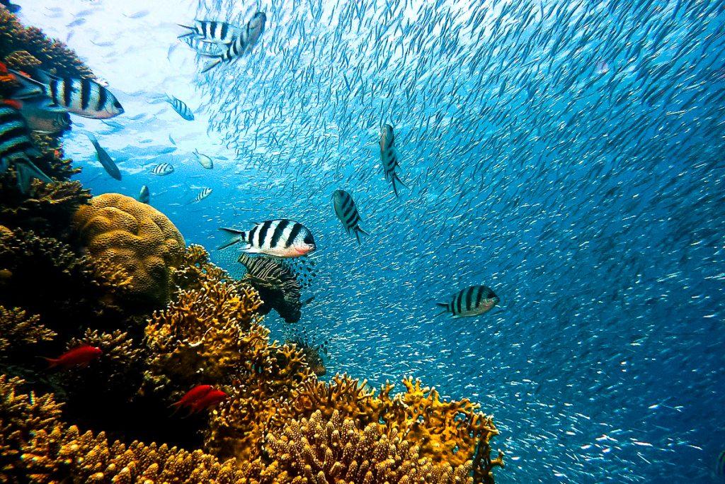Džono Penekampo koralinio rifo parkas