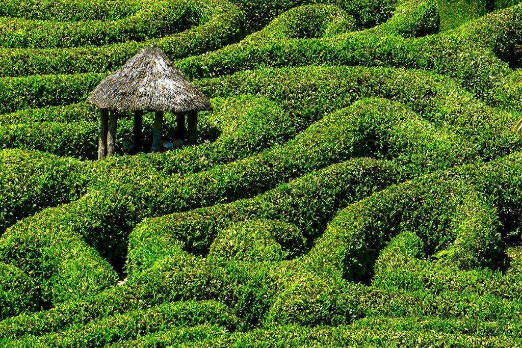 Longleat labirintas
