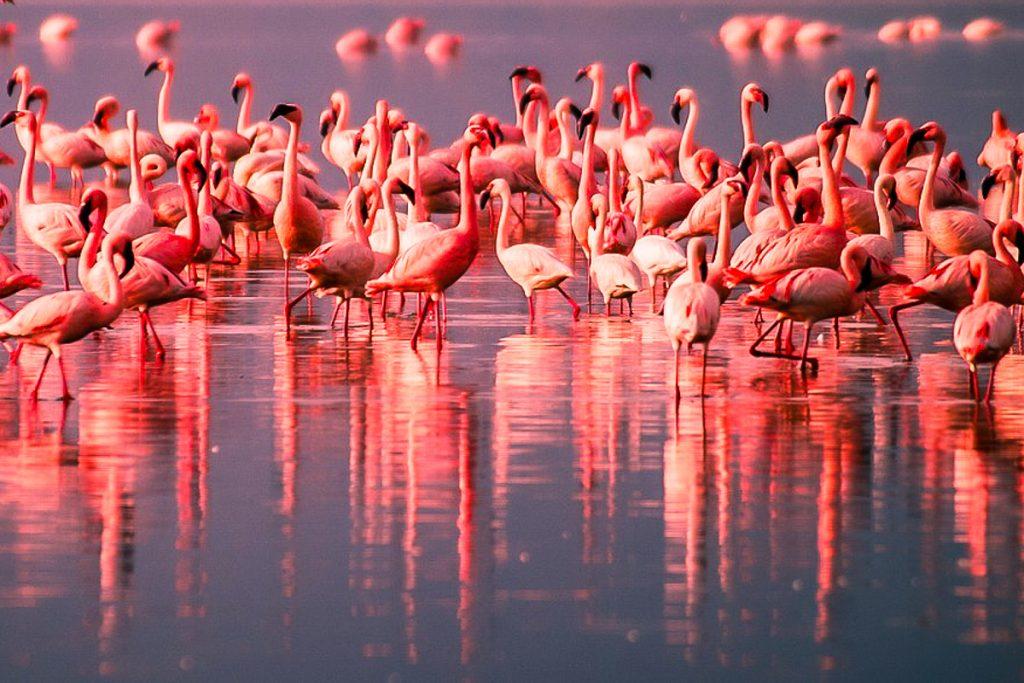 natrono ezeras tanzanijoje