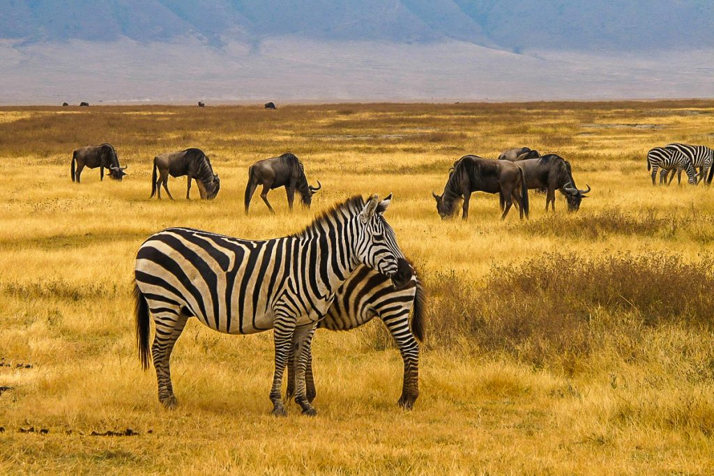 ngorongoro krateris tanzanija
