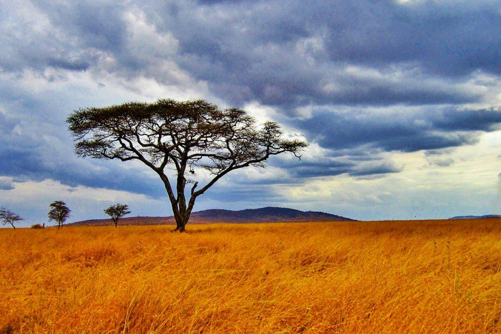 Serengecio nacionalinis parkas