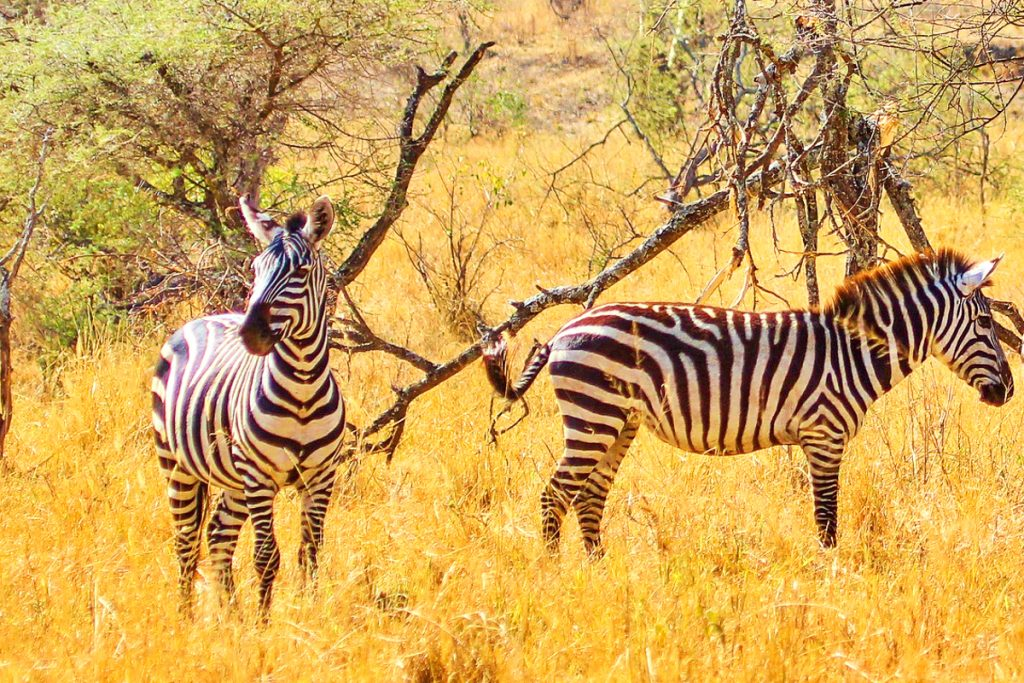 Ką pamatyti Tanzanijoje