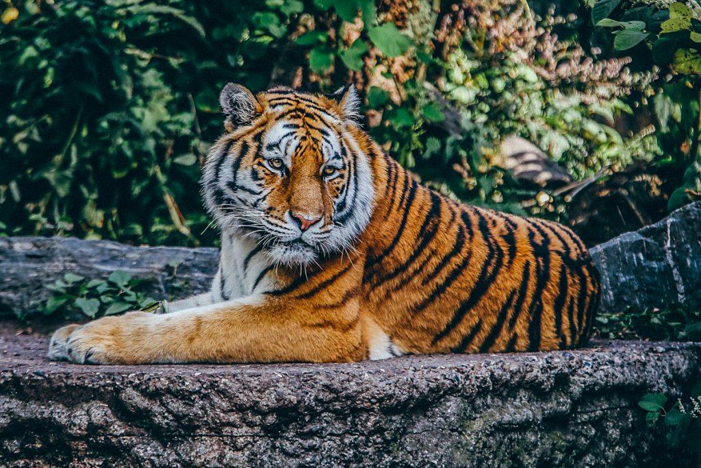 Tigrų zoologijos sodas