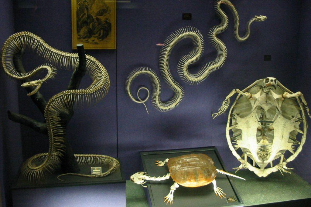 Australijos muziejus
