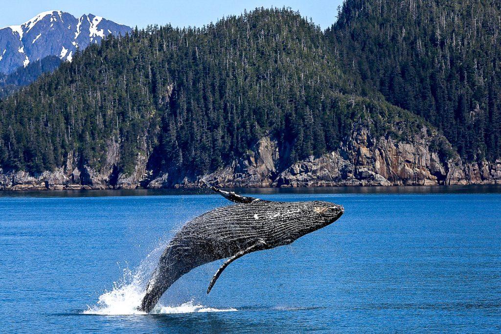 Edenas – banginių stebėjimas