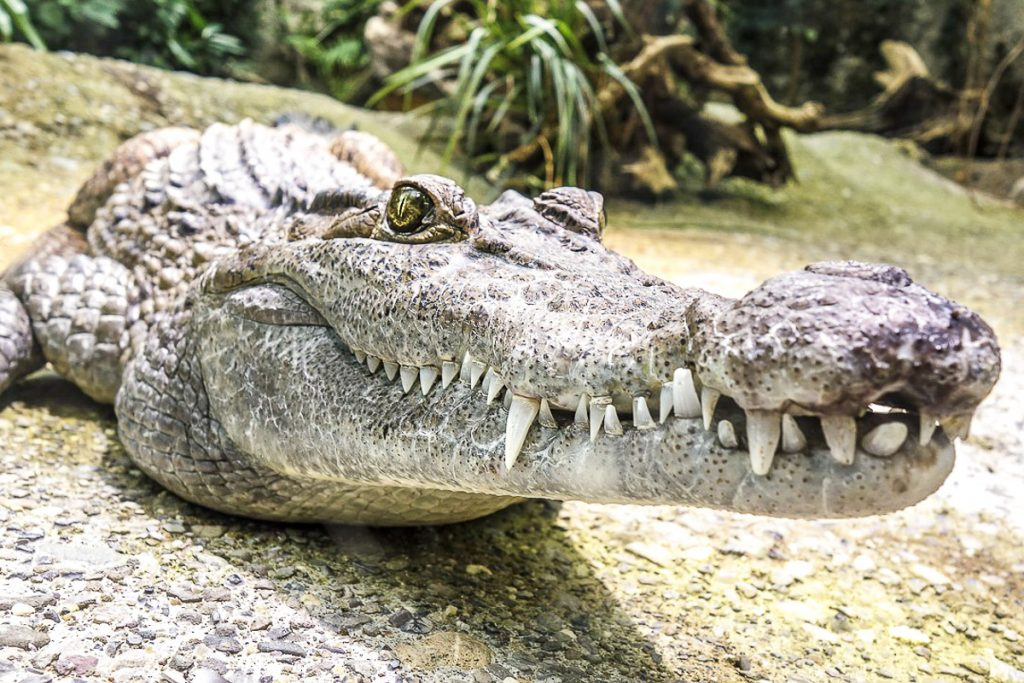 Hartleys krokodilų rezervatas