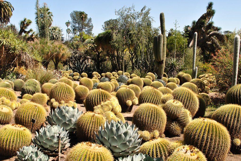 Kaktusų sodas Maljorkoje