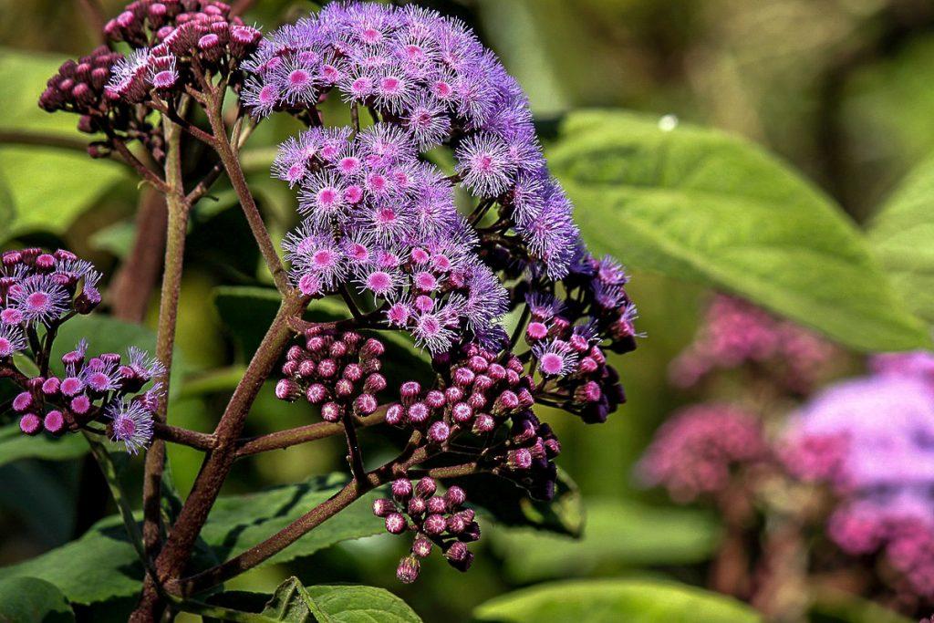 Karališkasis botanikossodas