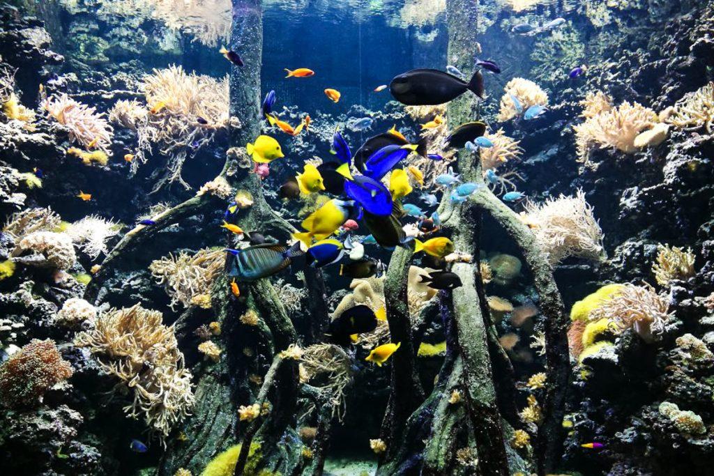 Lanzarotės akvariumas