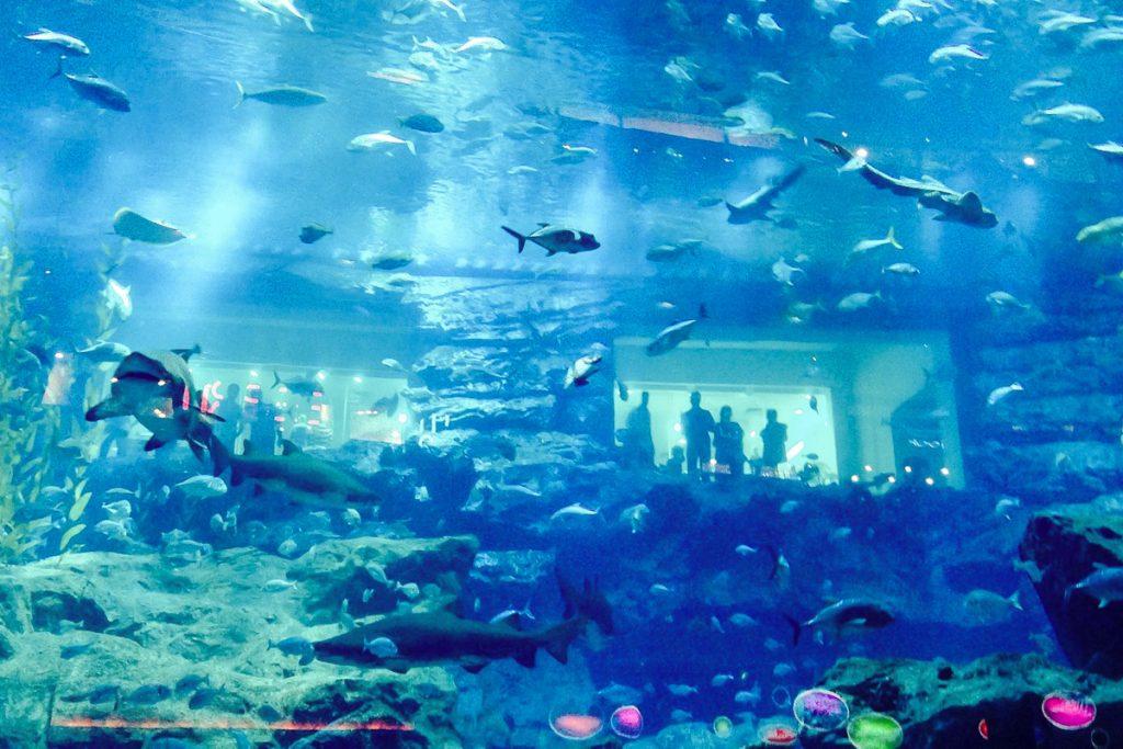 Dubajaus akvariumas