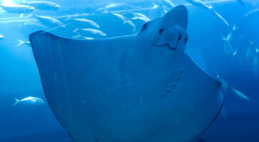 Dubajaus akvariumas fauna