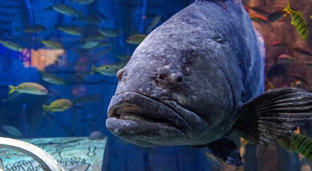 Dubajaus akvariumas žuvys