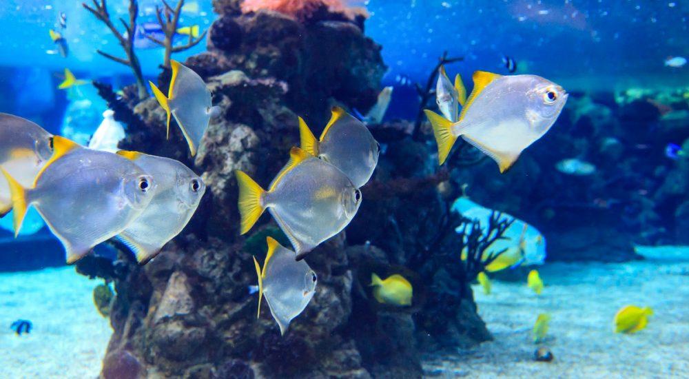 Dubajaus akvariumo žuvys