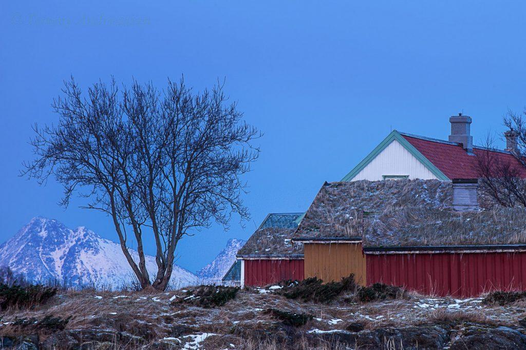 Kjerringøy kaimas