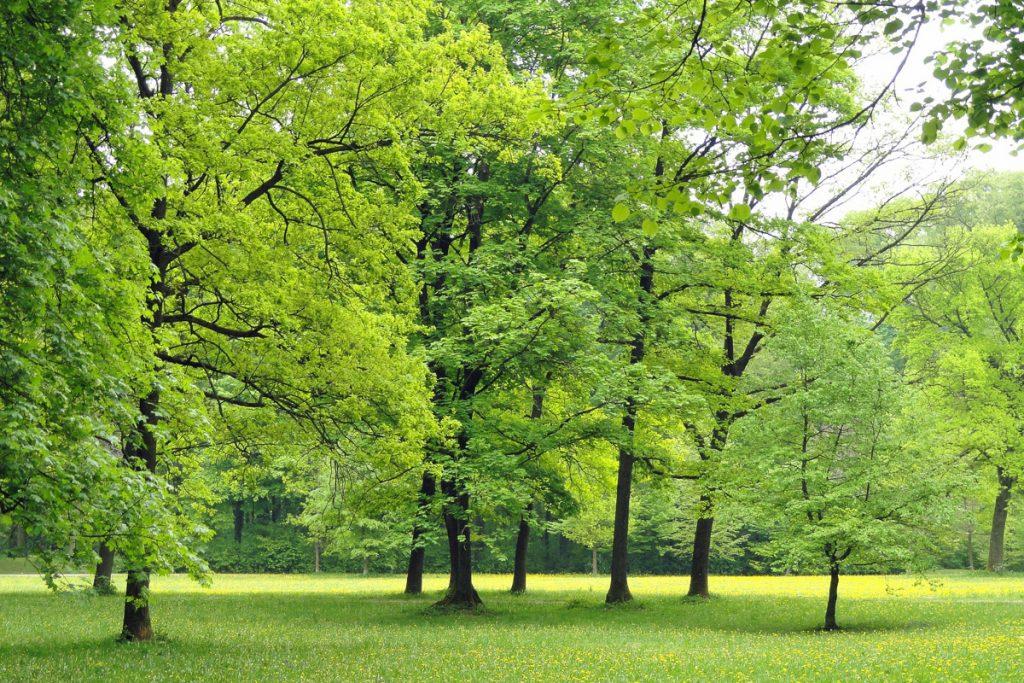 Ravnedaleno parkas