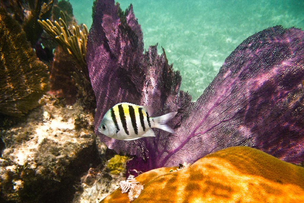Tortugos nacionalinis parkas