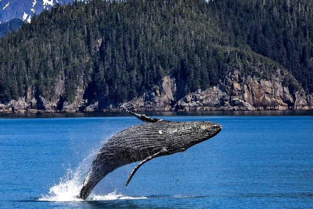 Madeiros banginių muziejus