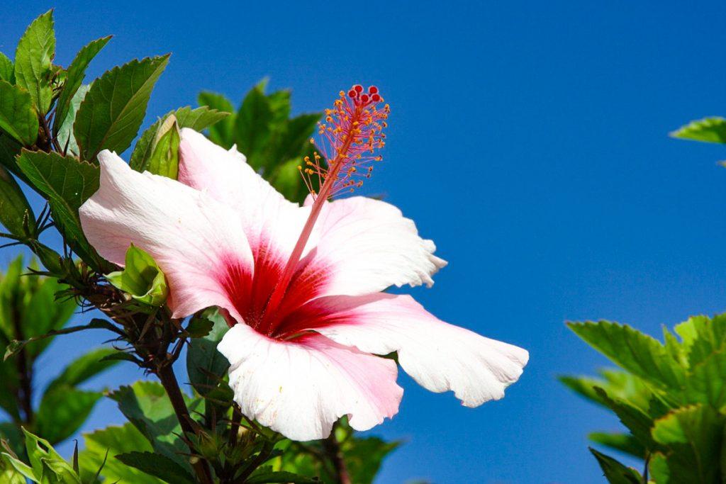 Madeiros botanikos sodas