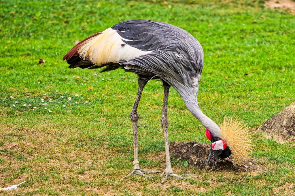 Lagoso zoologijos sodas