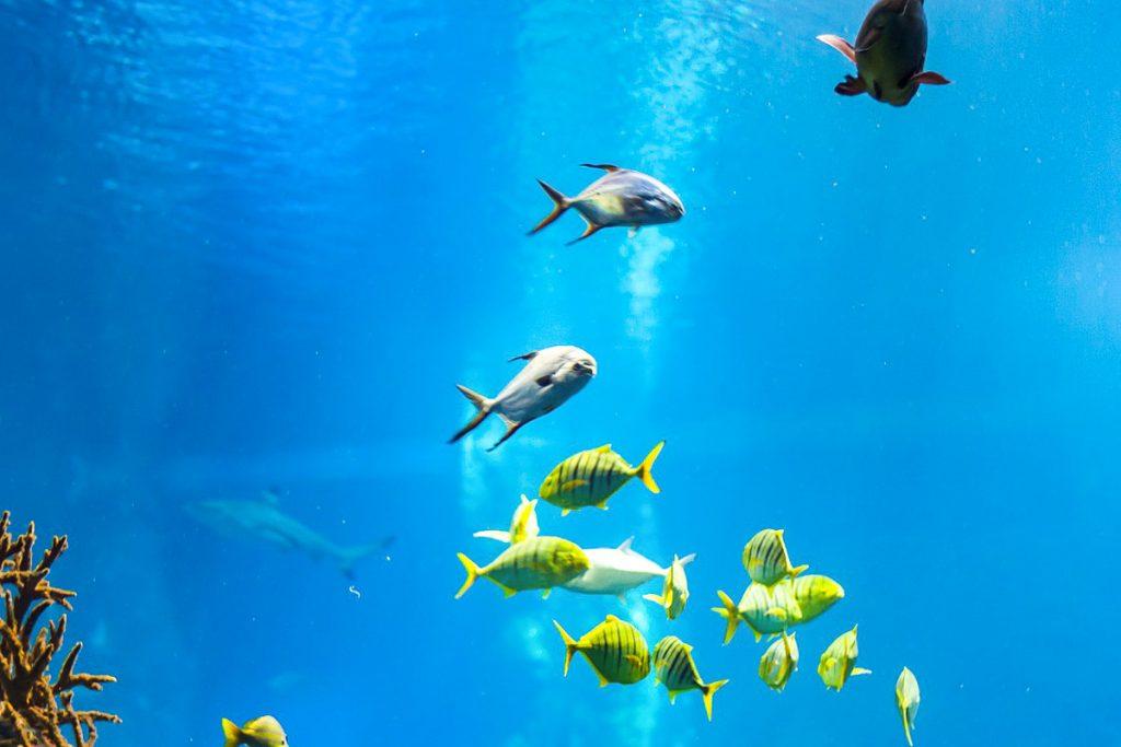 Pulos akvariumas