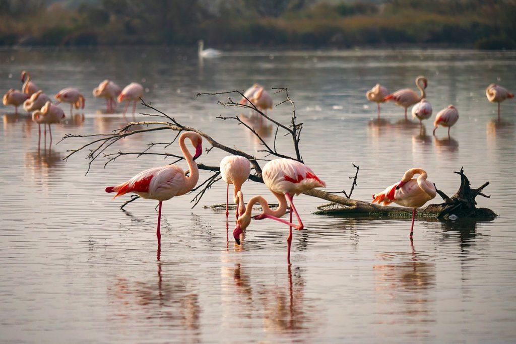 Ria Formosa gamtos parkas