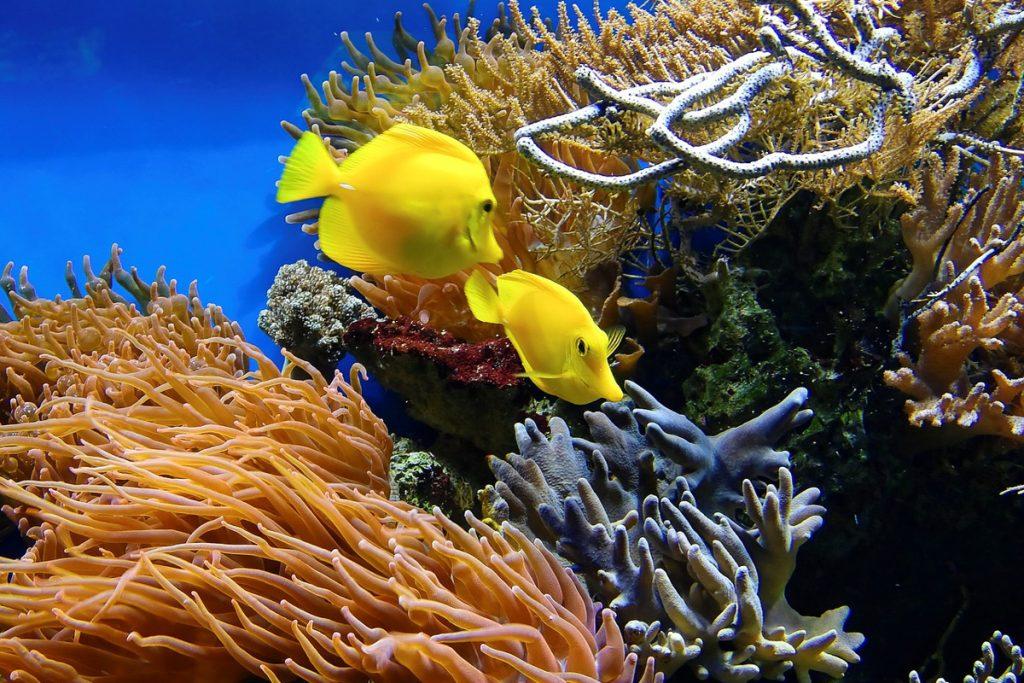 Rovinio akvariumas