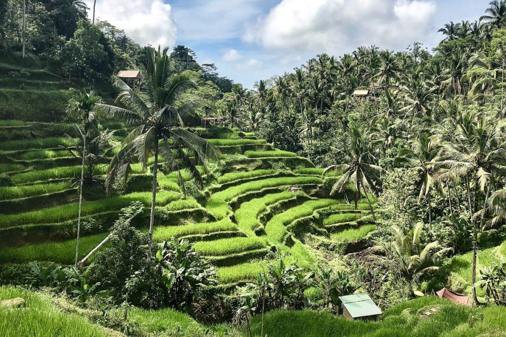 Jalituwih ryžių terasos