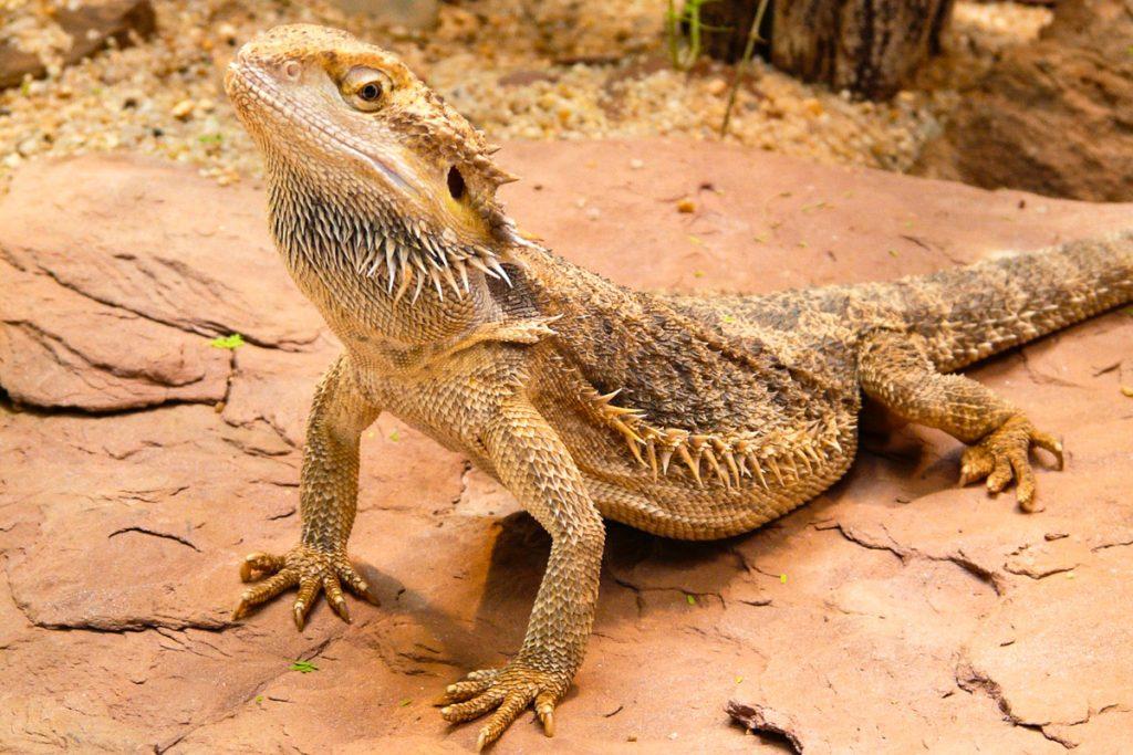 Barbadoso laukinės gamtos rezervatas