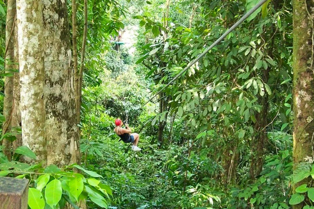 Canopy turas