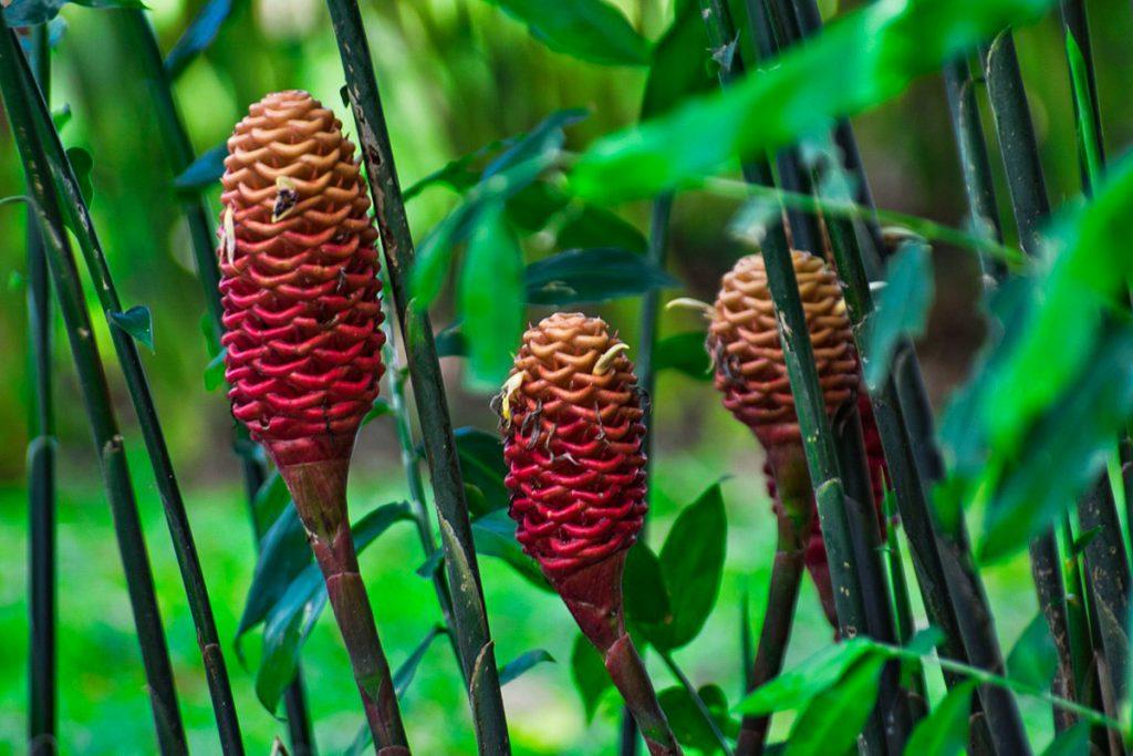 Gėlių miško botanikos sodas