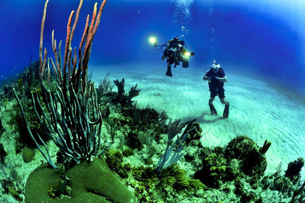 Nardymas Molokai saloje