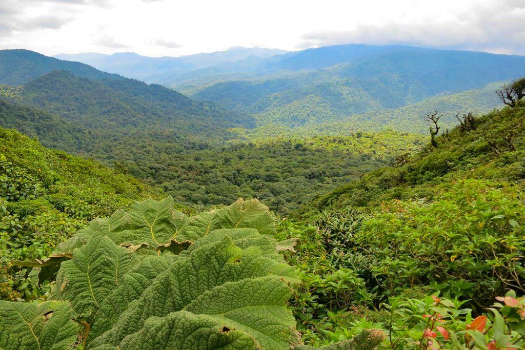 Monteverde draustinis