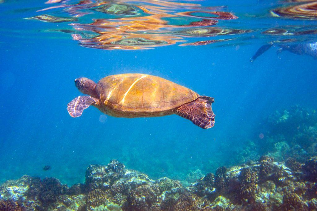 Maui vandenyno centras