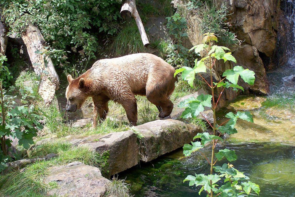Alpių zoologijos sodas