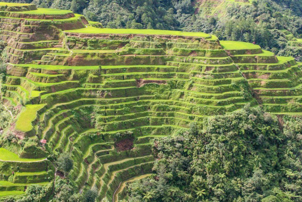 Banaue ryžių terasos