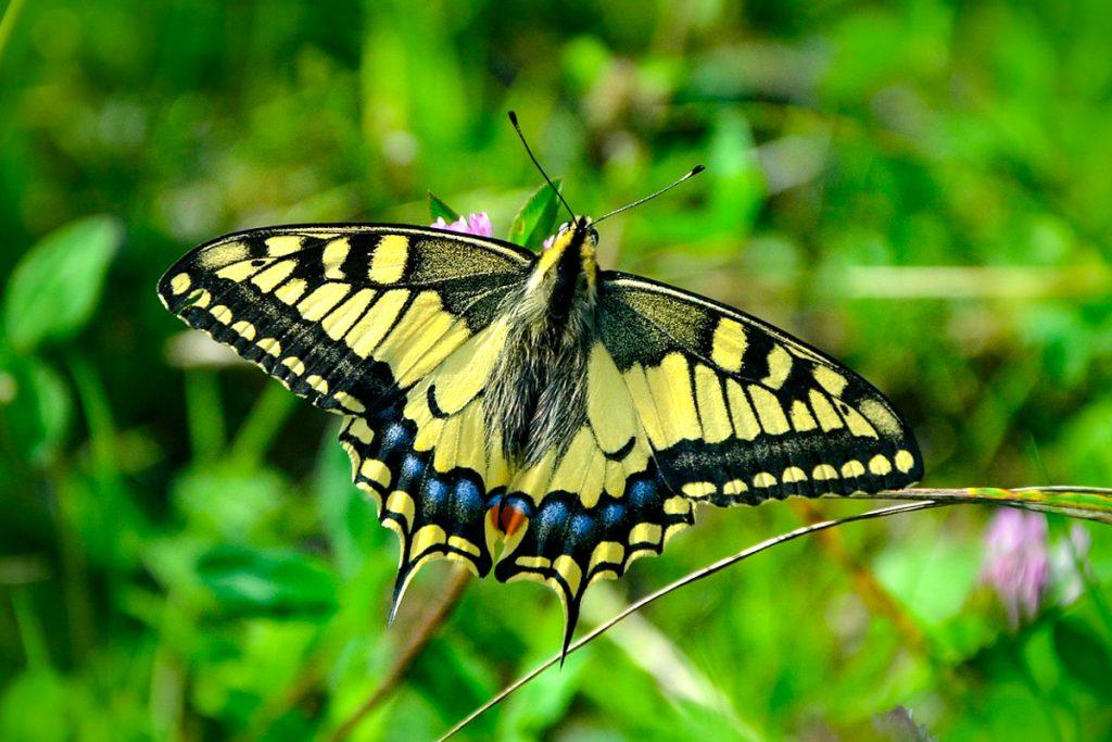Boholio drugelių konservatorija
