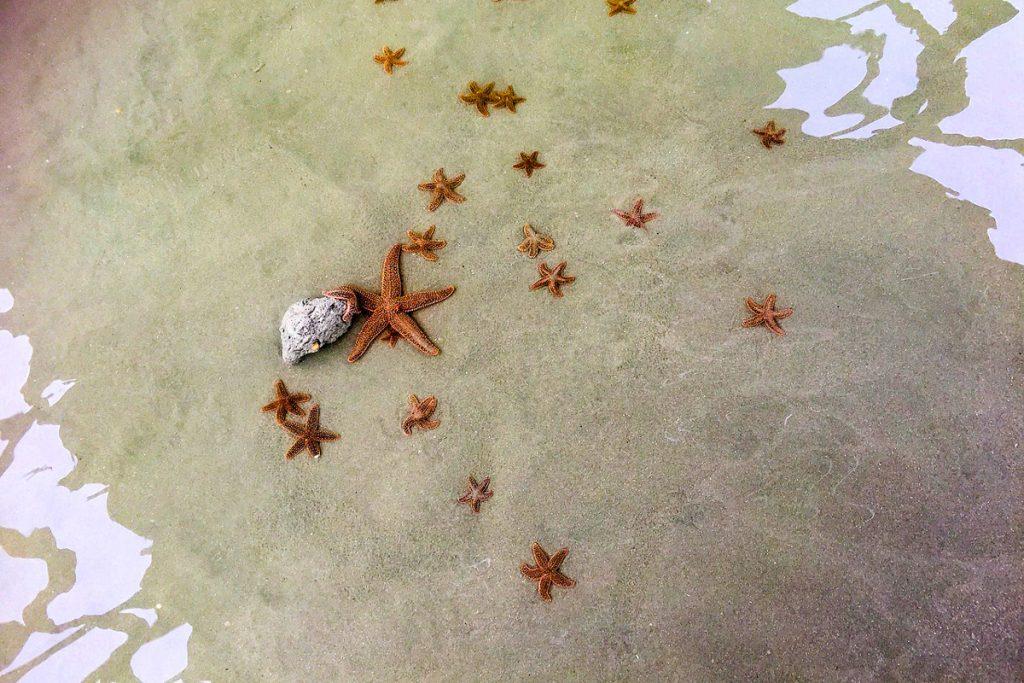 Jūros žvaigždžių sala