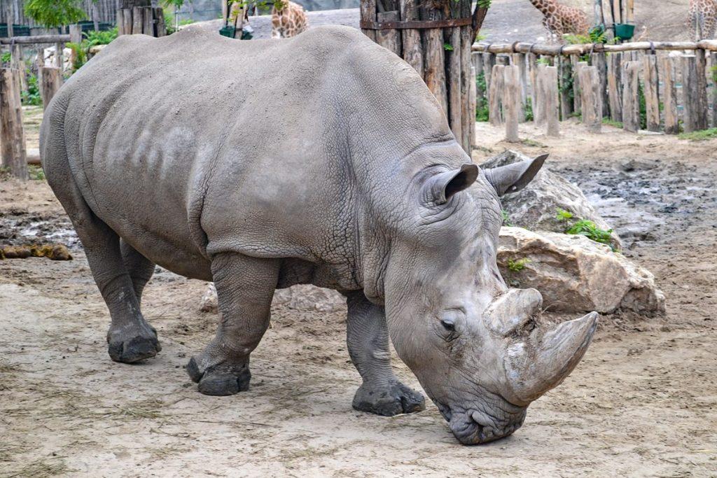 Budapešto zoologijos sodas