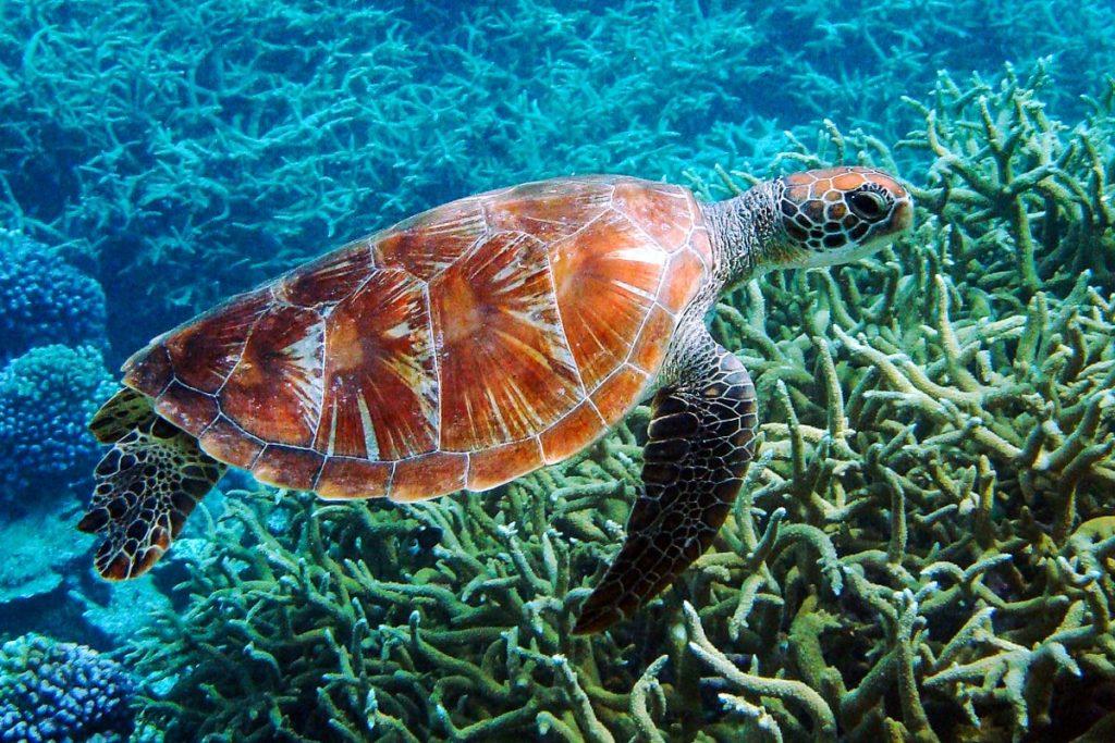 CretAquarium akvariumas
