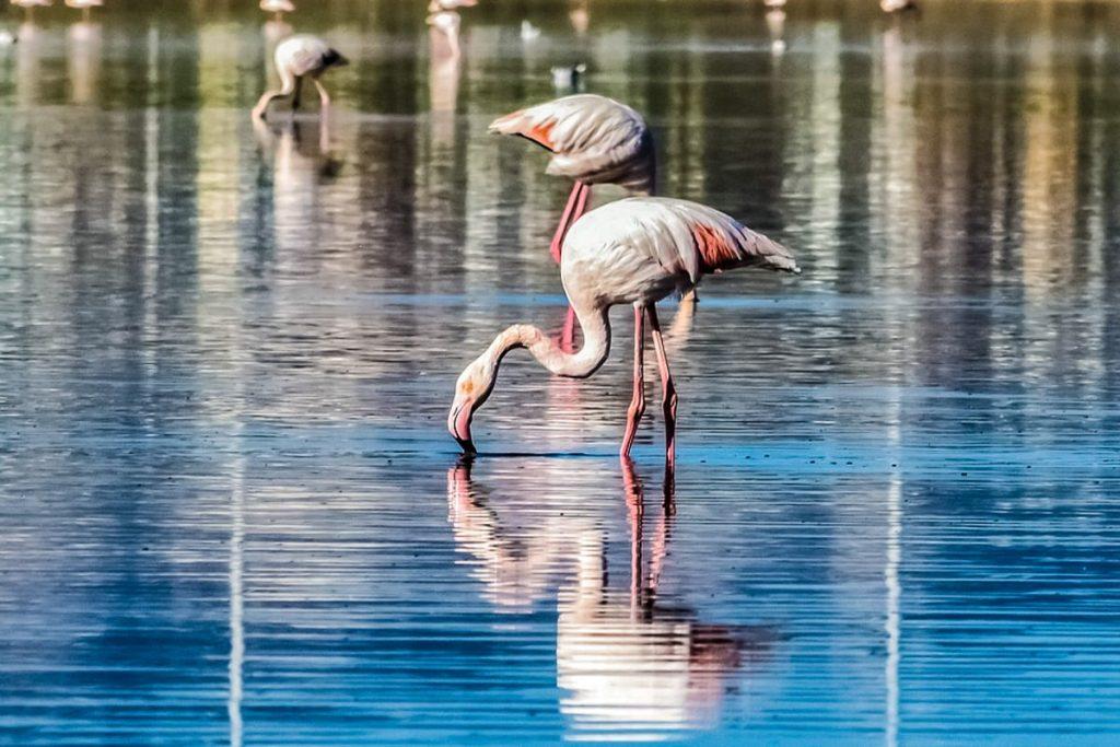 Larnakos druskos ežeras