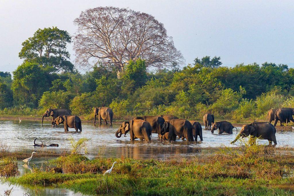 Šri Lanka poilsinės kelionės