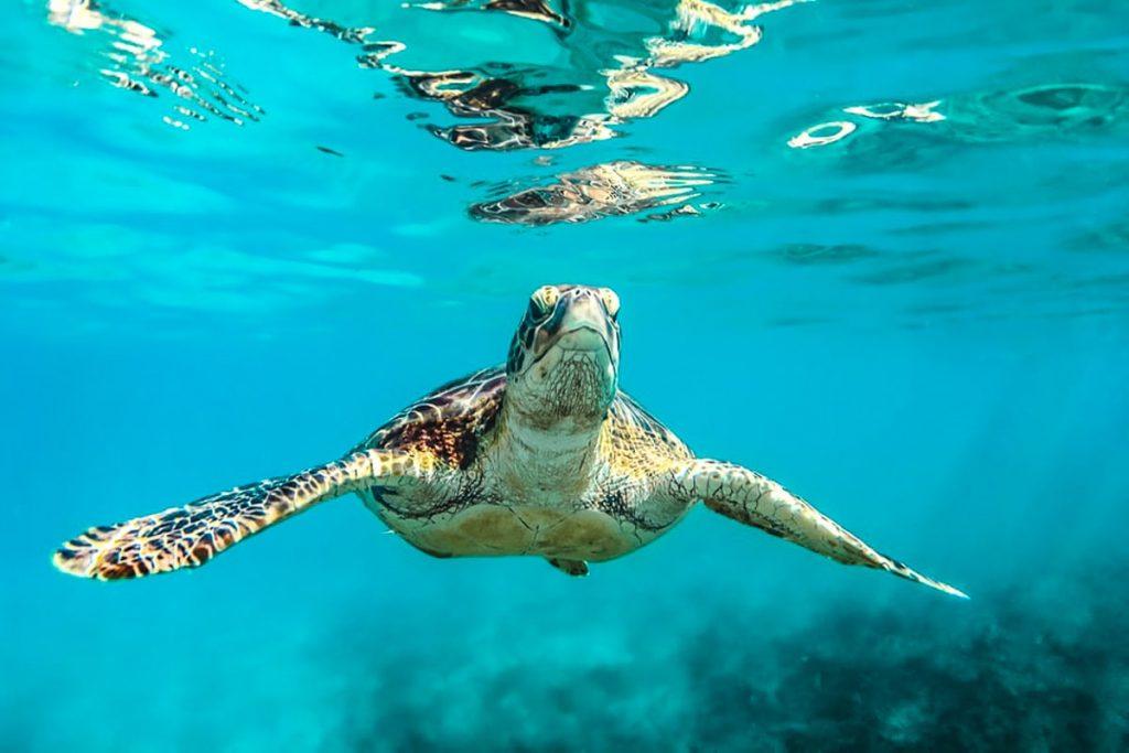 Karibų rojus Barbadosas!
