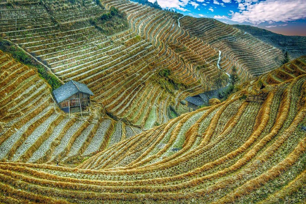 Honghės hanių ryžių terasos