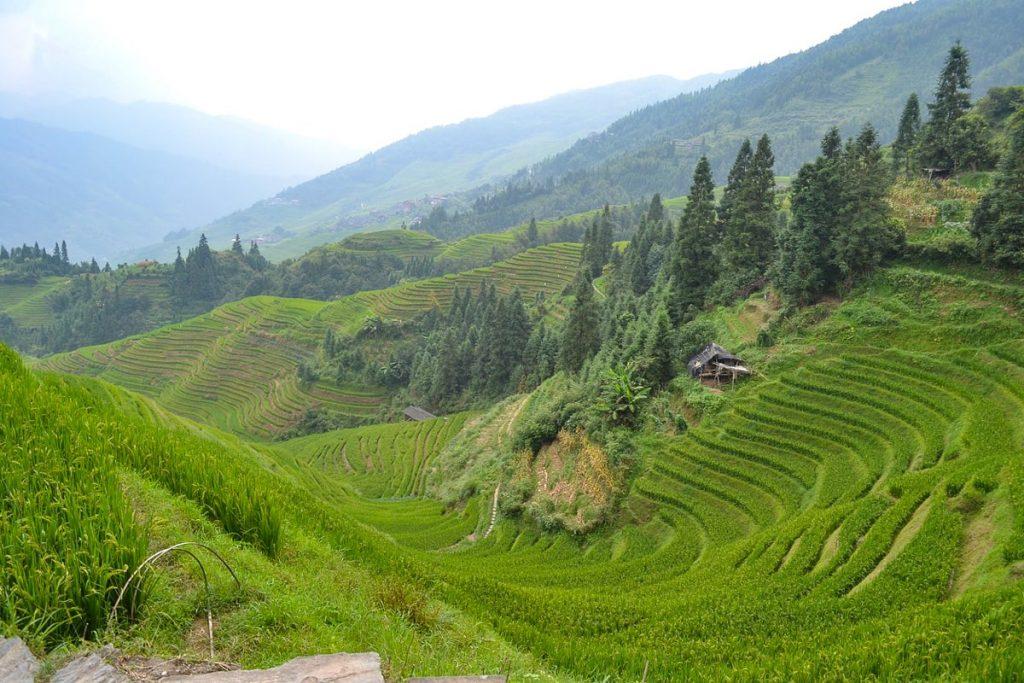 Longšengo ryžių terasos